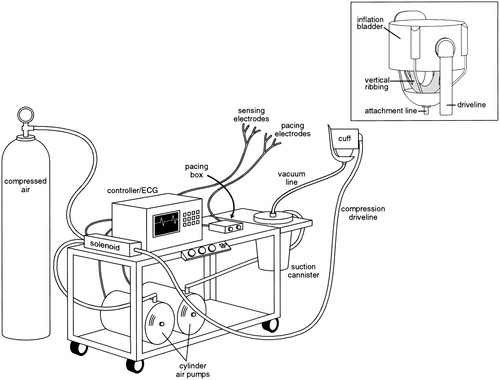 Physiological And Hemodynamic Evaluation Of Nonuniform Direct