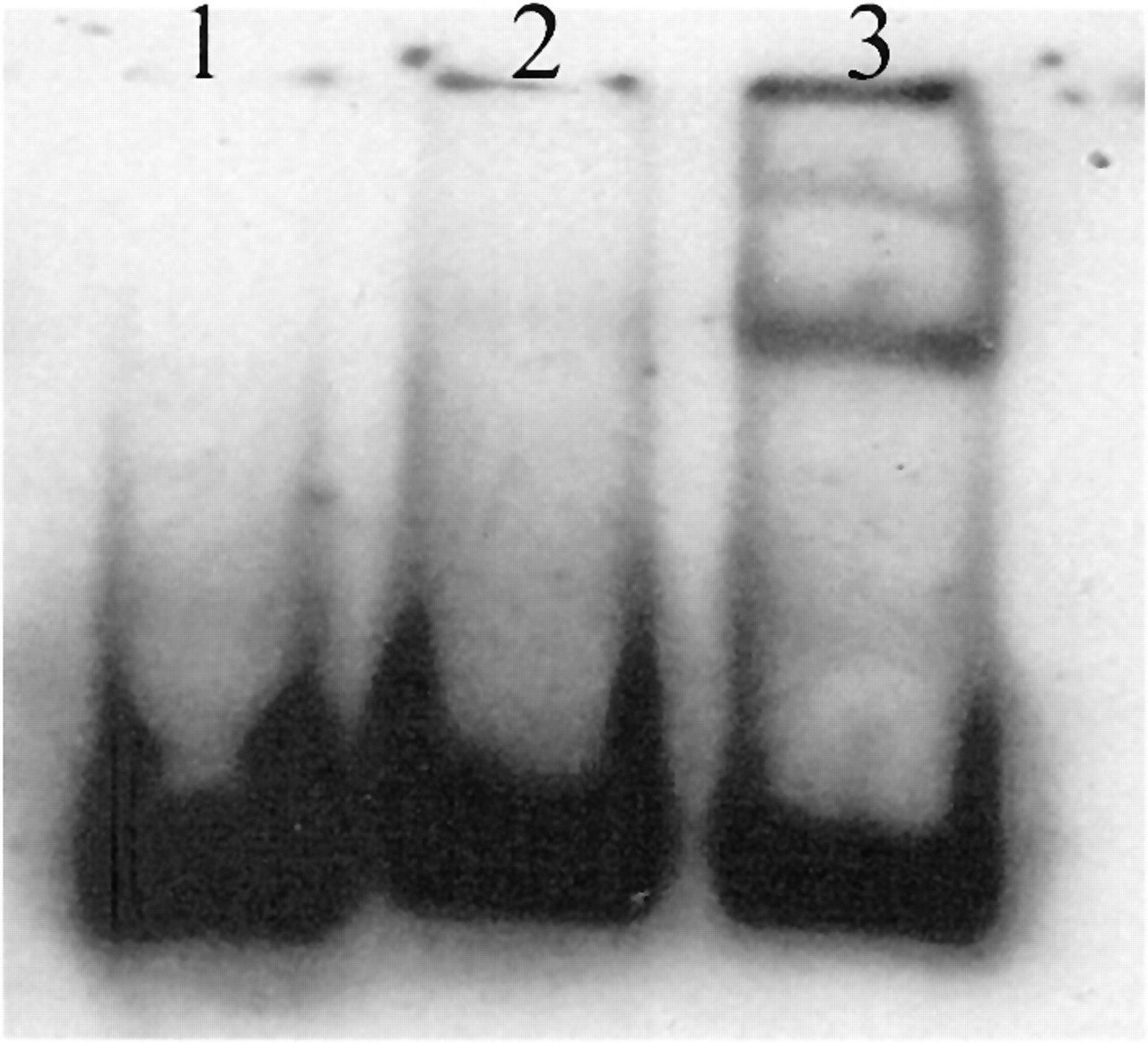 Haplotype-Specific Effects on Endothelial NO Synthase