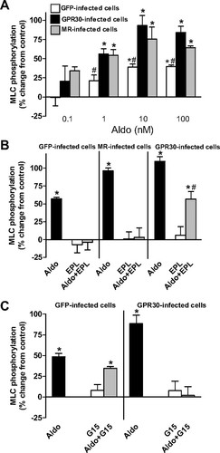 GPR30 Expression Is Required for the Mineralocorticoid
