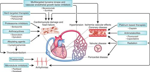 Cardio-Oncology | Circulation Research