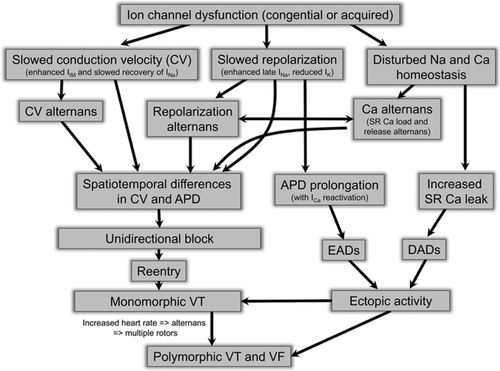 Role of Sodium and Calcium Dysregulation in Tachyarrhythmias