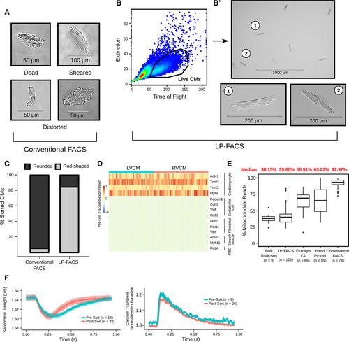 Large Particle Fluorescence-Activated Cell Sorting Enables
