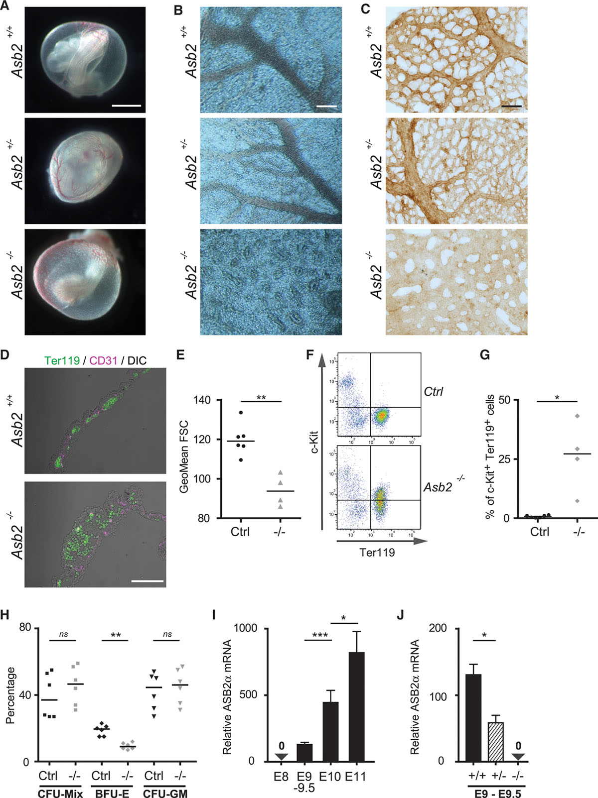 Asb2α–Filamin A Axis Is Essential for Actin Cytoskeleton Remodeling