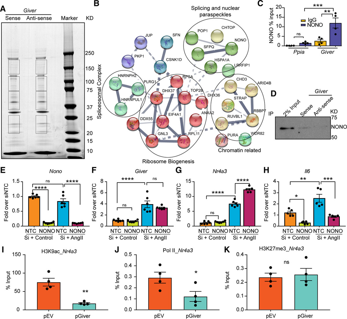 A Novel Angiotensin II–Induced Long Noncoding RNA Giver Regulates