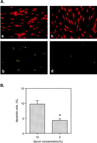 Evidence From a Novel Human Cell Clone That Adult Vascular