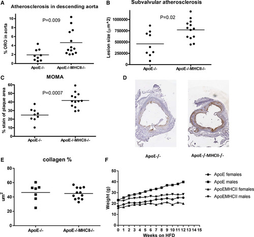 Lack of Ability to Present Antigens on Major