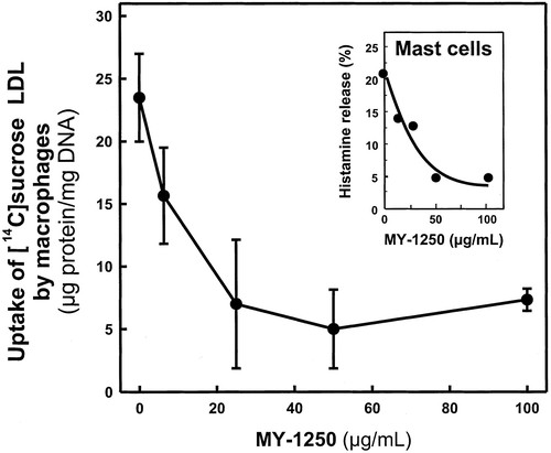 Inhibition of Mast Cell–Dependent Conversion of Cultured
