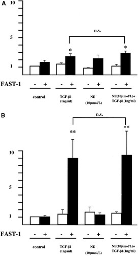 Norepinephrine Enhances Fibrosis Mediated by TGF-β in