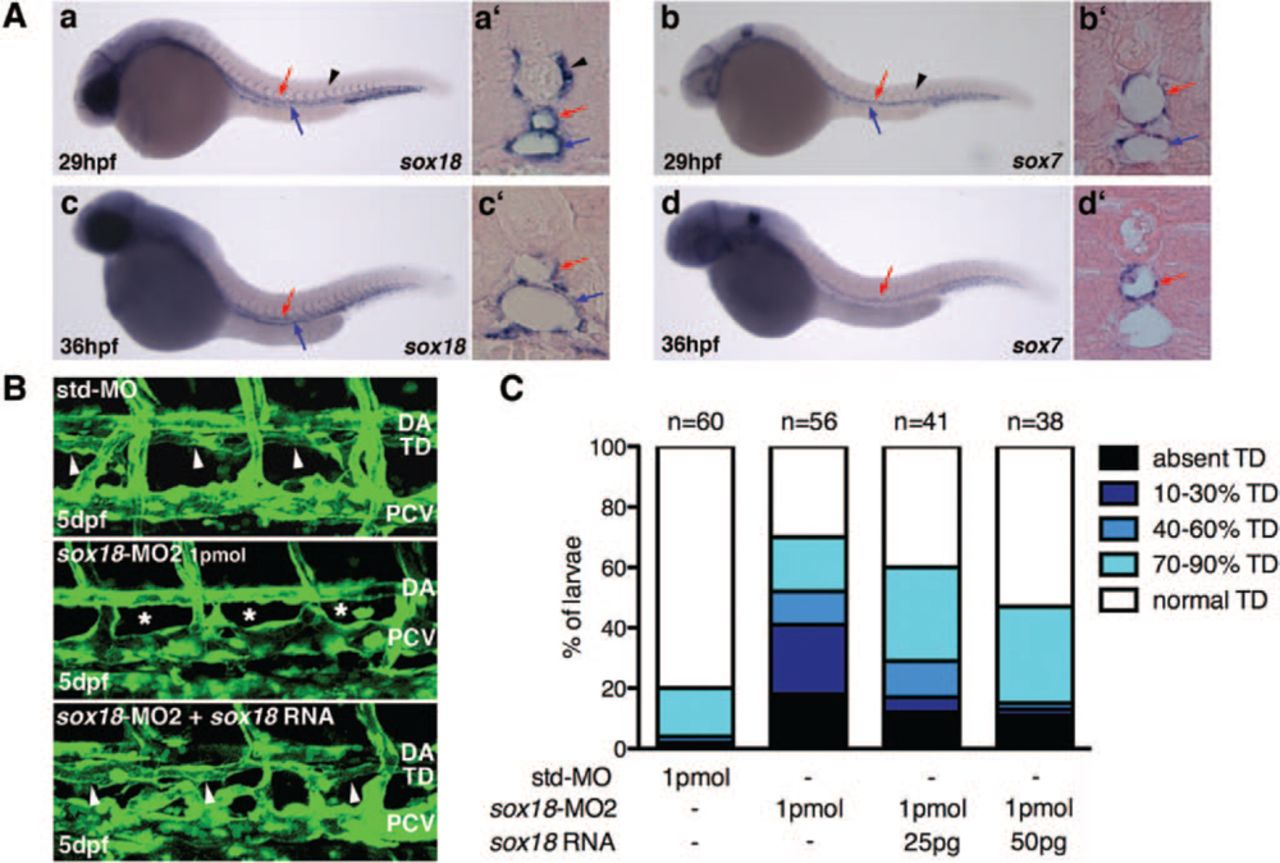 Sox18 Genetically Interacts With VegfC to Regulate Lymphangiogenesis