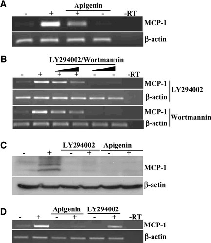 Critical Role for Casein Kinase 2 and Phosphoinositide-3-Kinase in