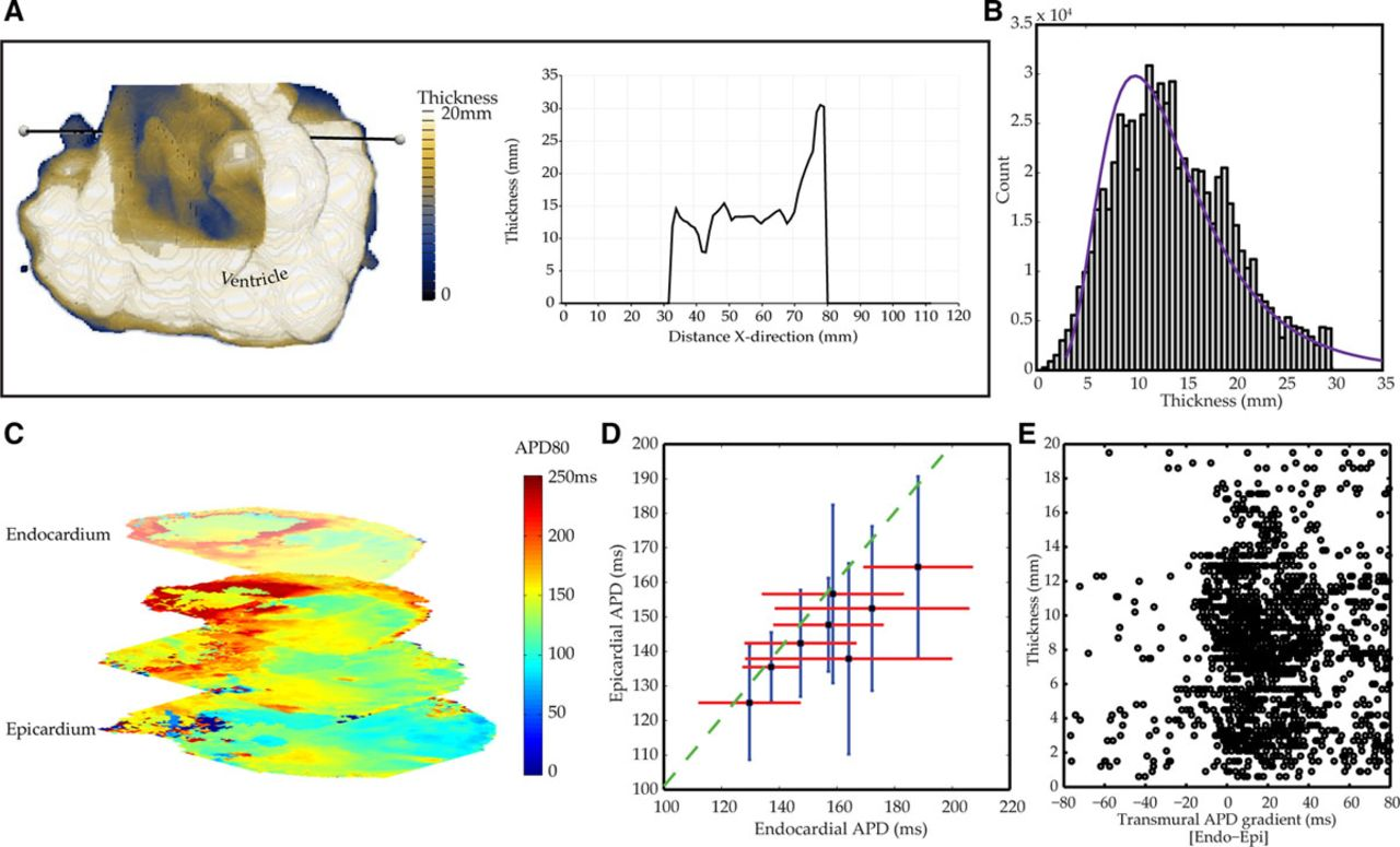 Quantification of the Transmural Dynamics of Atrial