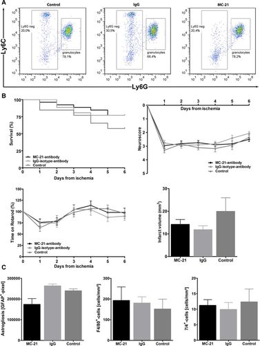 Targeting Different Monocyte/Macrophage Subsets Has No Impact on