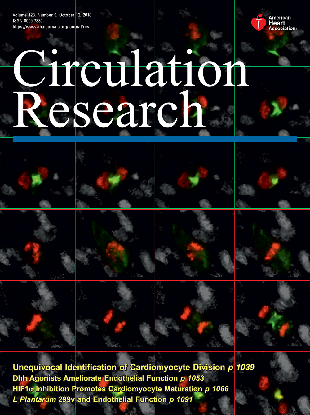 The Microbiome and Endothelial Function | Circulation Research