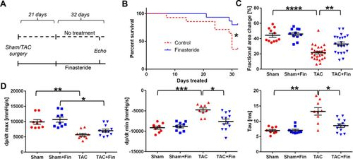 Antiandrogenic Therapy With Finasteride Attenuates Cardiac