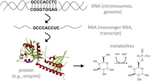 Basic Concepts and Potential Applications of Genetics and Genomics