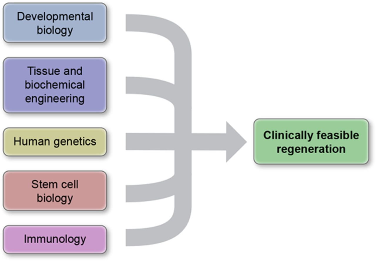 The Future of Cardiovascular Regenerative Medicine | Circulation