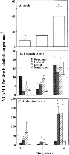 Focal Increases in Vascular Cell Adhesion Molecule-1 and
