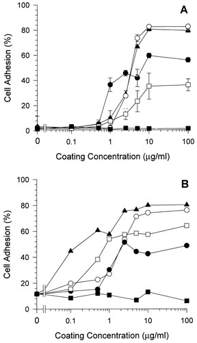 Endothelial Cell Interactions With Synthetic Peptides From