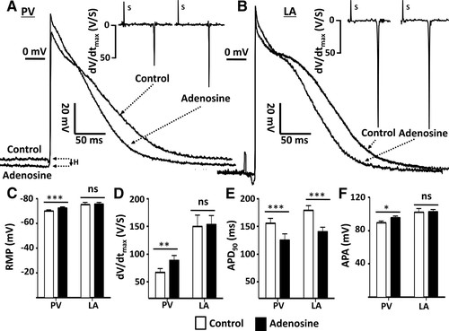 Mechanisms by Which Adenosine Restores Conduction in Dormant Canine on