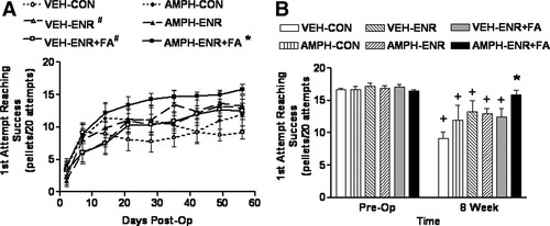 Motor Recovery and Axonal Plasticity With Short-Term Amphetamine
