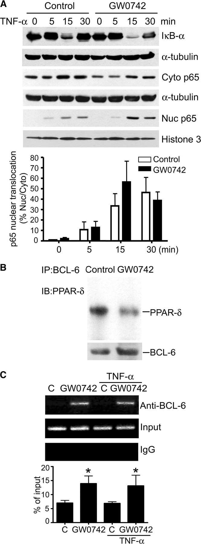 Suppression of Pro-inflammatory Adhesion Molecules by PPAR-δ