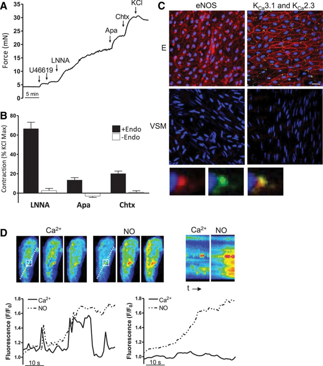 Functional Tuning of Intrinsic Endothelial Ca2+ Dynamics in