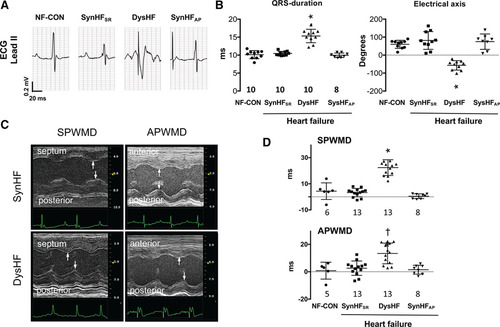 Chronic Atrial and Ventricular Pacing in the Mouse