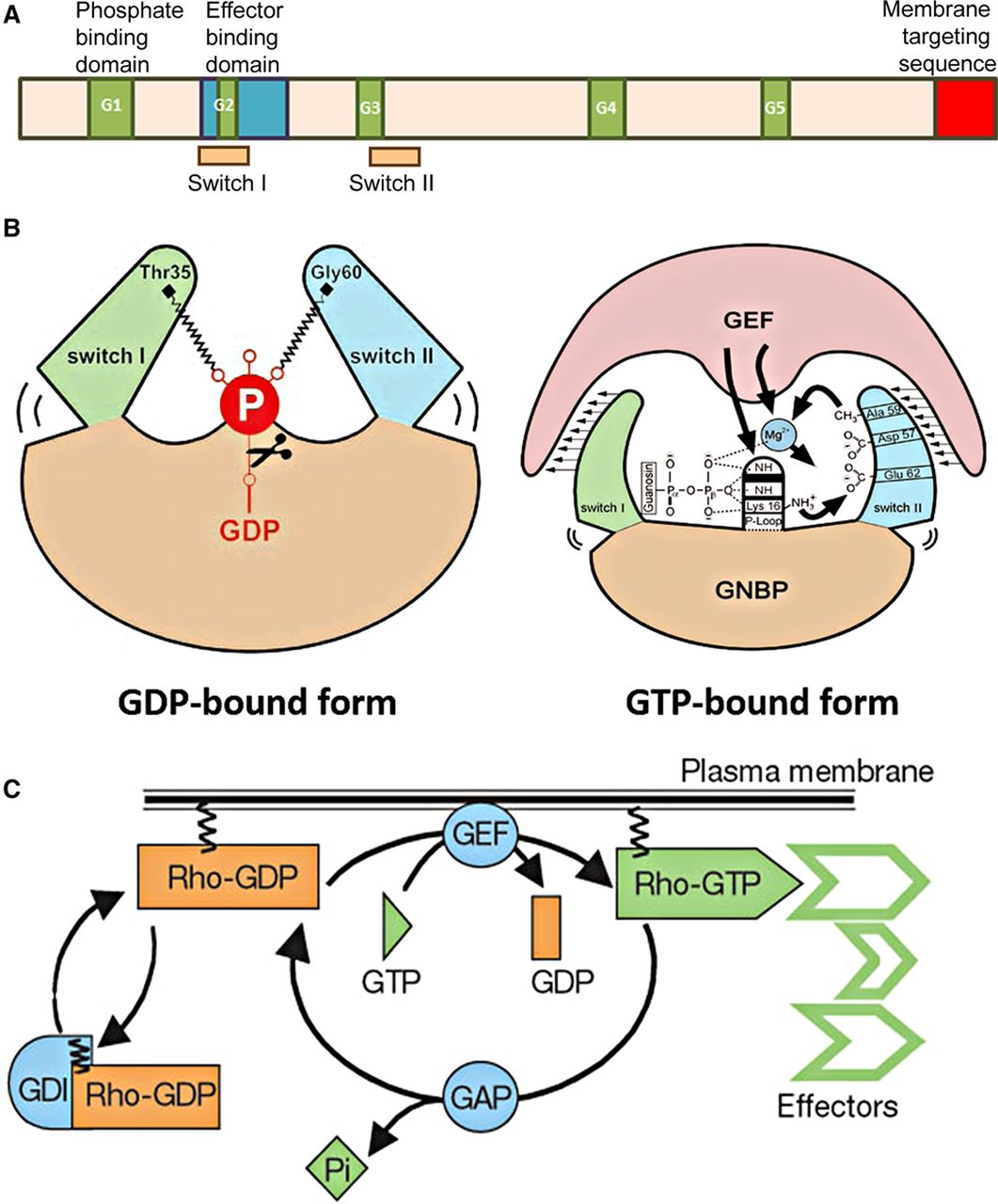 Protein Interactions at Endothelial Junctions and Signaling
