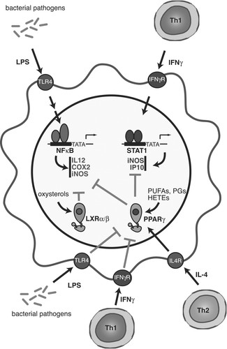 Decoding Transcriptional Programs Regulated By Ppars And Lxrs In The