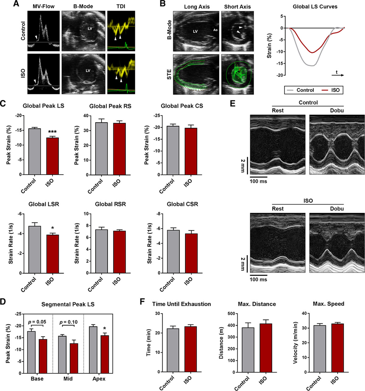 Characterization of Myocardial Microstructure and Function in an