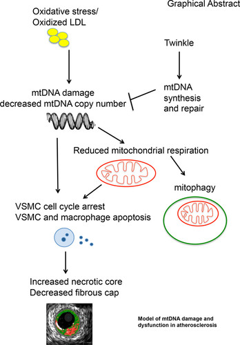 objective—  mitochondrial