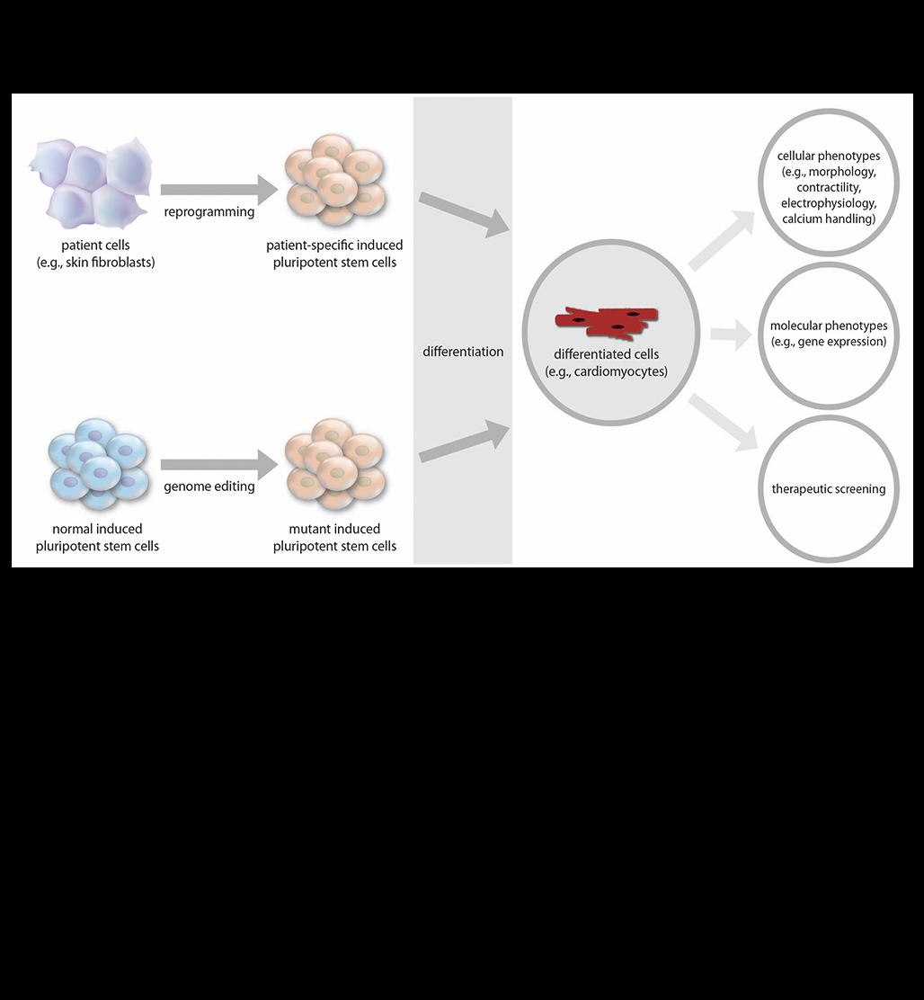 Induced Pluripotent Stem Cells for Cardiovascular Disease