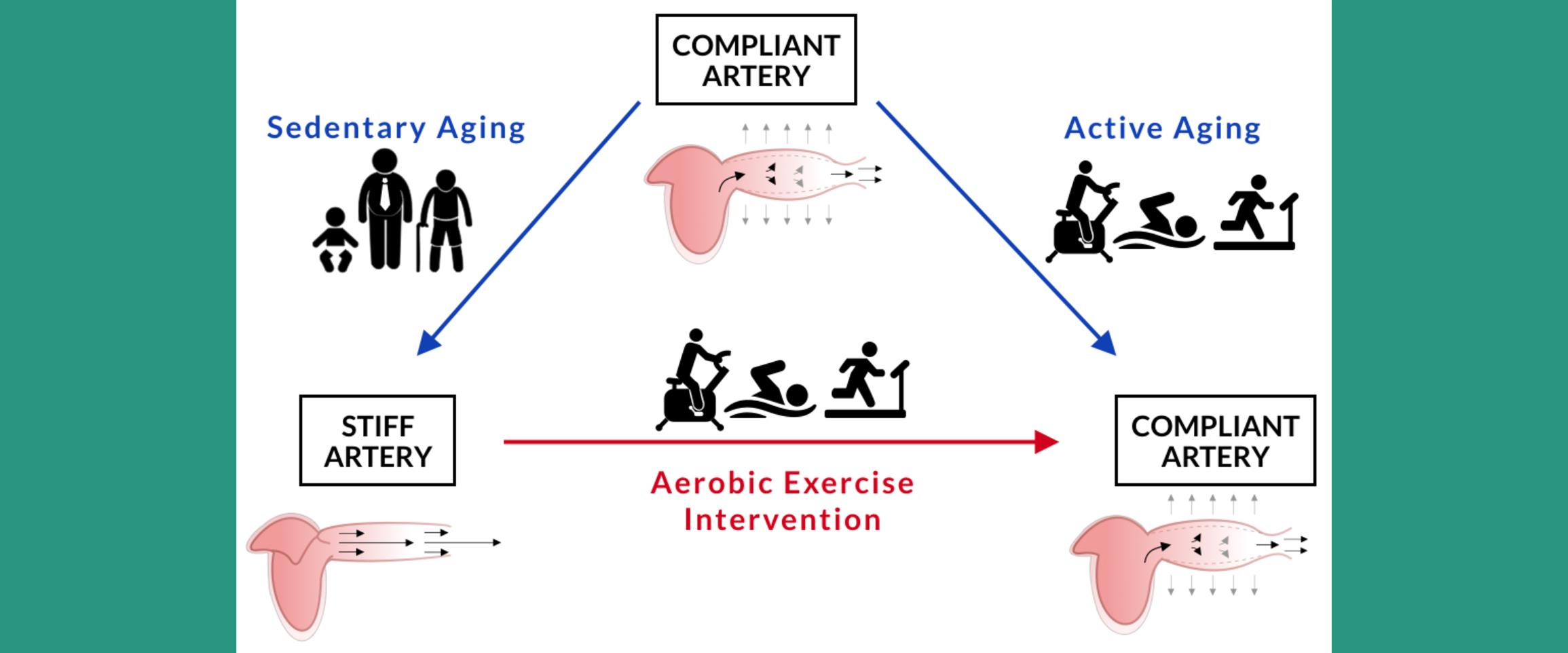 Hypertension | AHA/ASA Journals